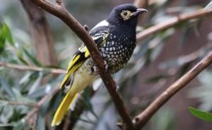 Activities - Birdwatching